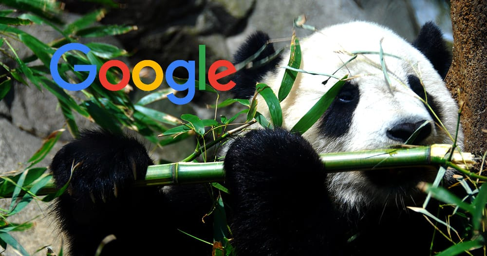 Google-panda-pipo