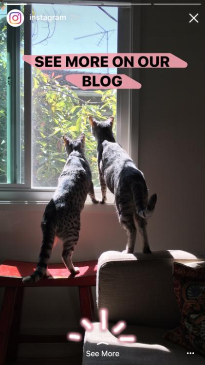 """Lien """"En savoir plus"""" dans les Stories d'Instagram"""