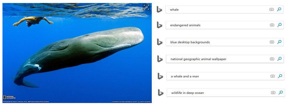 Bing Images décrit les entités sémantiques des images avec la reconnaissance des formes